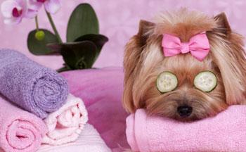 dog-grooming-spa
